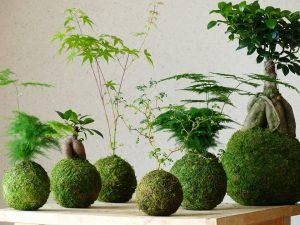 Plantapolis, des créations végétales pleines de poésie