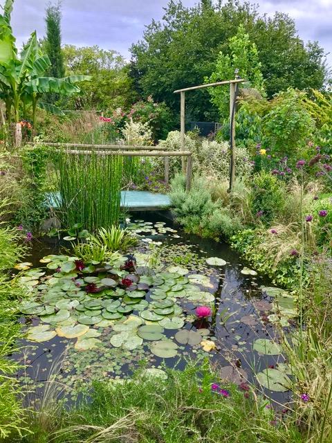 Plantation autour d un bassin plantes filtrant lueau pour - Plantation autour d un bassin ...